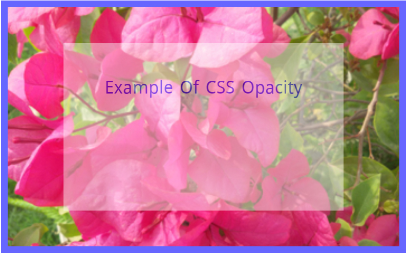 Example Of CSS Opacity